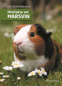 Cover for Minifakta om marsvin