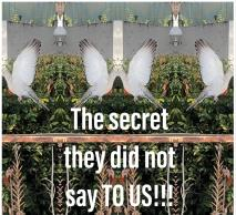 Cover for The secret they did not say TO US!!!